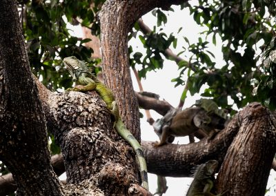 Faune Galapagos