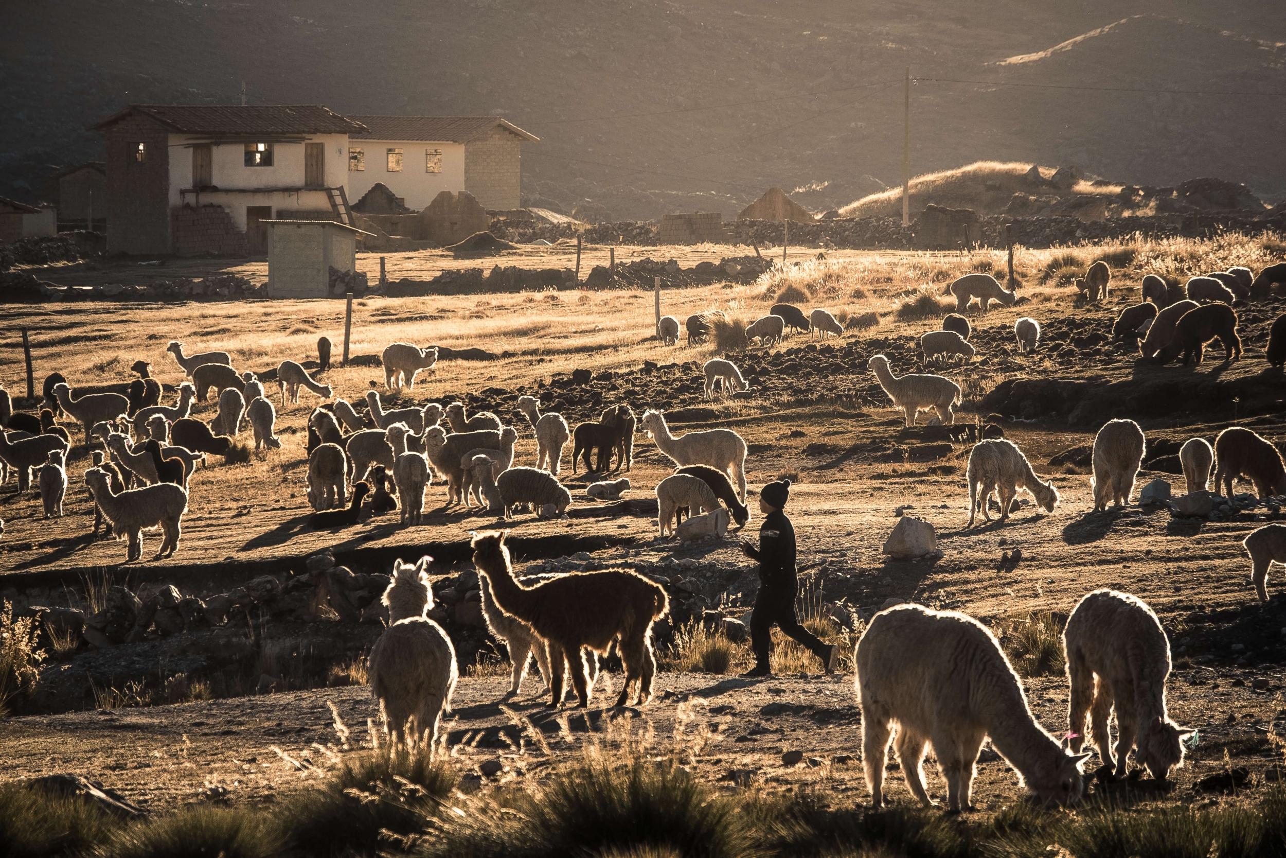 Qoyllur Riti, Qoylluriti, Festival, religion, Andes, Pérou, Ausangate, Cuzco, Culture, célébrations, Quéchua