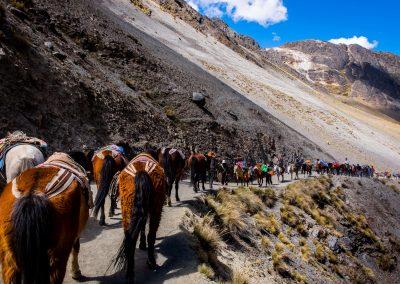 Qoylluriti chevaux