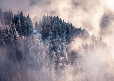 Forêt Le Môle Tiny