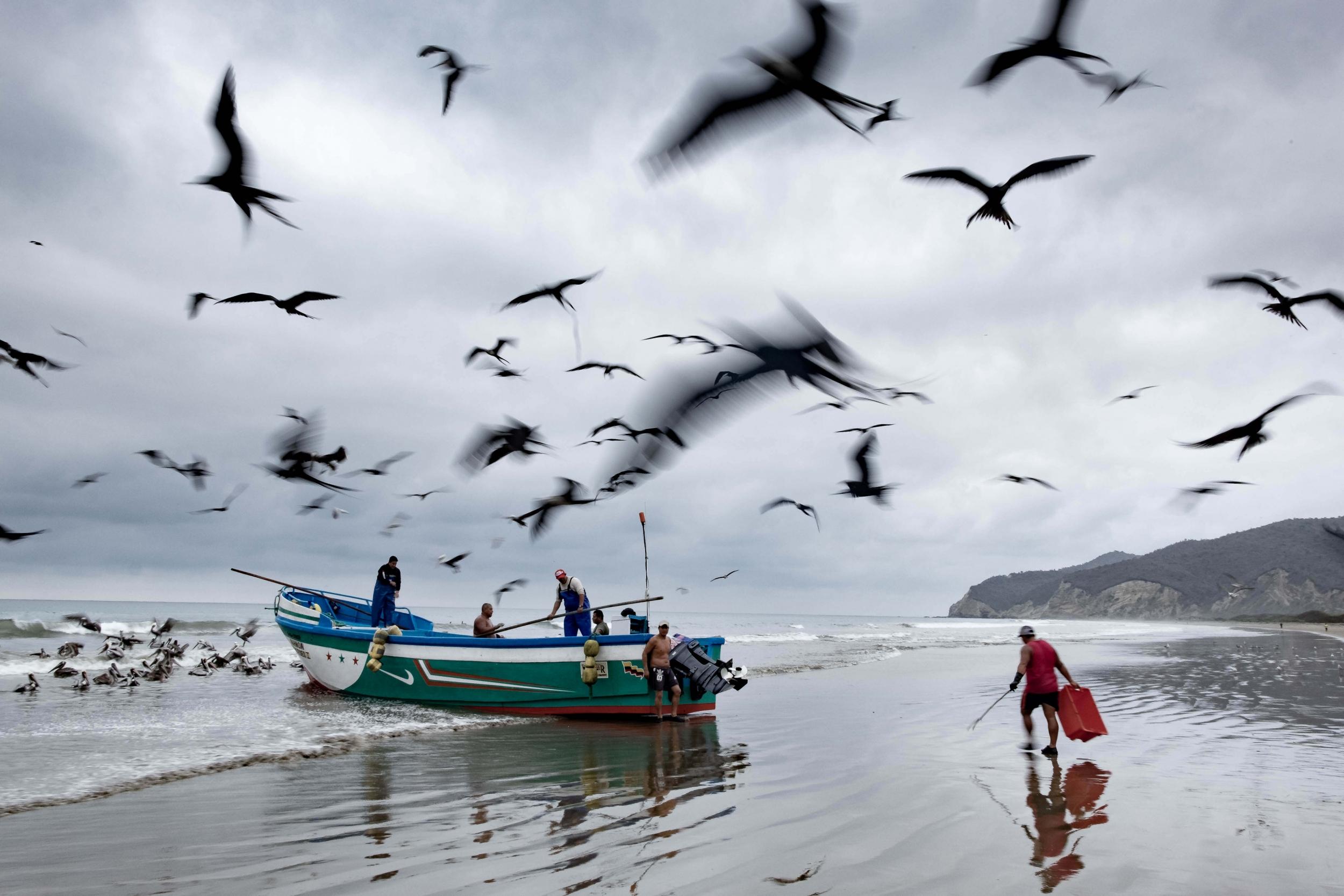 Puerto Lopez, Côte Pacifique, Equateur, Isla de la Plata, Fous à pieds bleus, Blog de voyage, Blog de photographie, Voyage en Equateur
