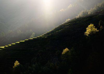 Longji rice terrasses