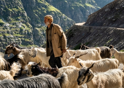Shepherd - Spiti Valley