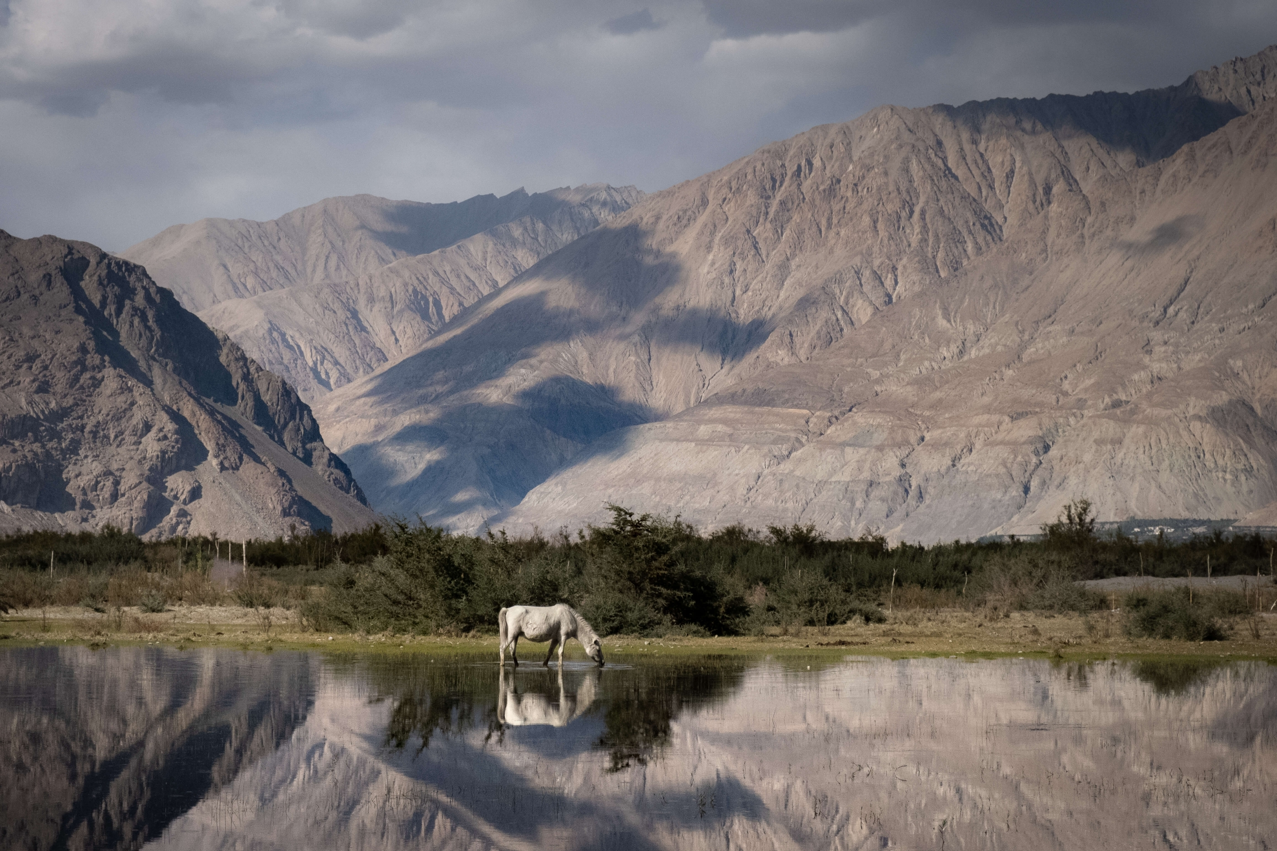 Horse - Nubra Valley