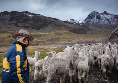 Life-peru-andes-alpacas